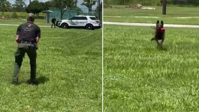K9 at Florida sheriff's office helps handler with gender reveal