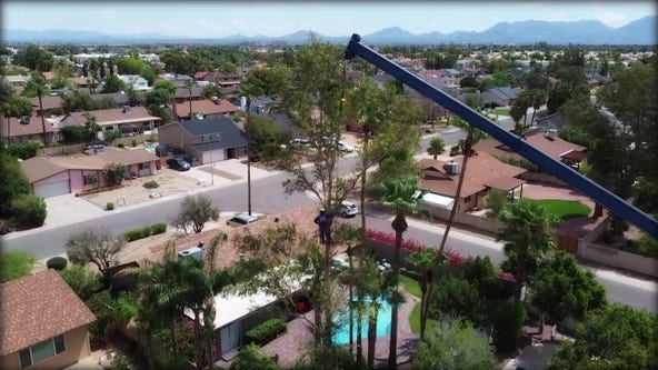 Drone Zone: Tree removal service busy following late July storms.