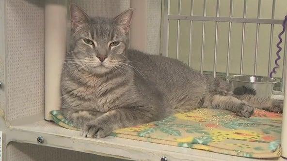 Arizona animal welfare organizations aim to keep pets at home amid expiration of eviction moratorium