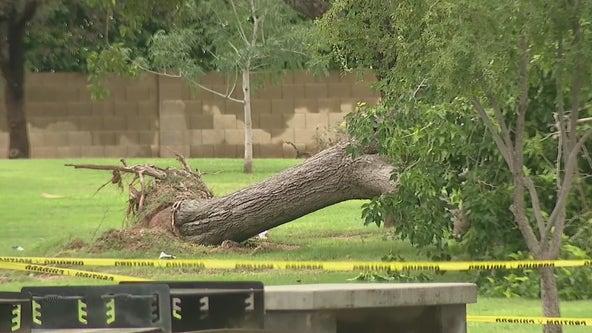 APS, park crews work to clean up monsoon mess in Scottsdale