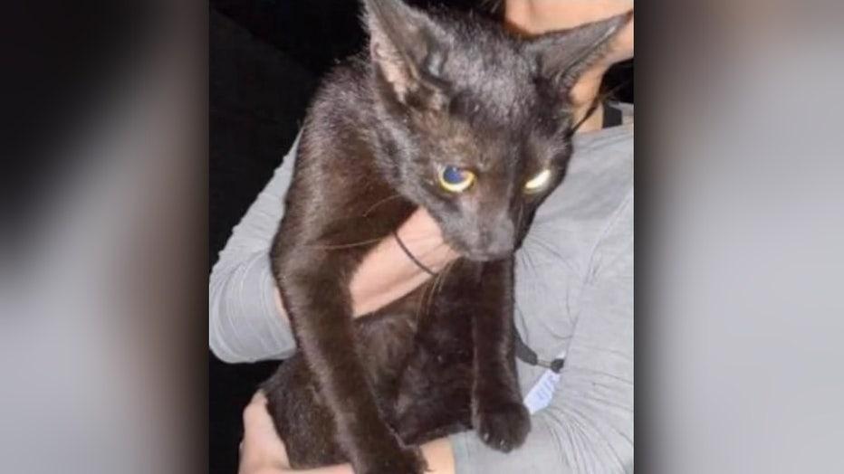 binx-surfside-missing-cat-found-alive-wsvn.jpg