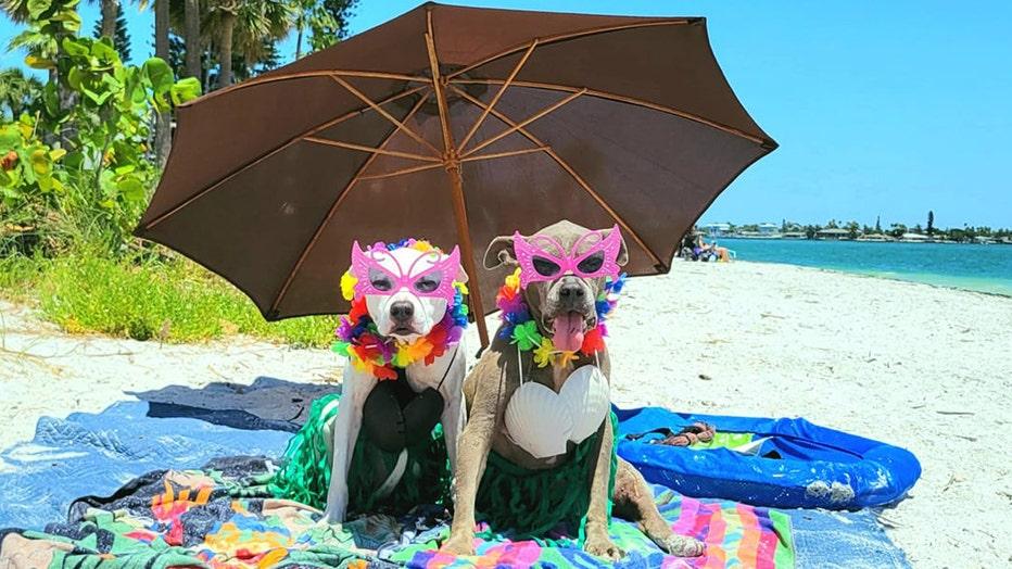 glasses-and-umbrella-beach.jpeg