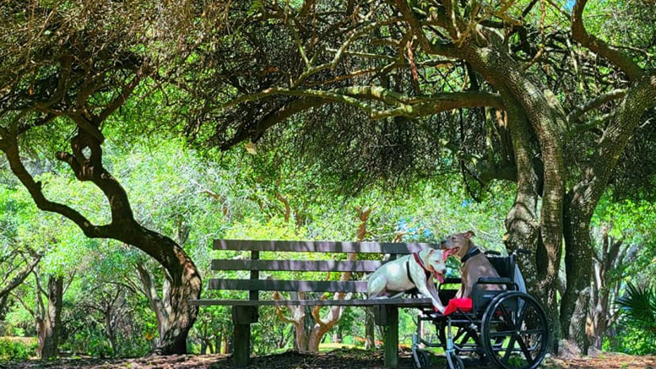 wheelchair-bench-with-tree.jpeg