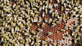 Michigan truck hauling up to 50 million bees crashes, unleashing swarm