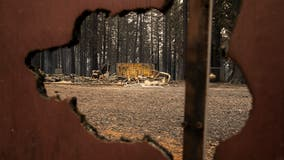 Newsom requests presidential disaster declaration for California wildfires