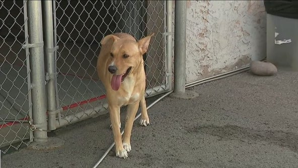 3-year-old dog located in Scottsdale looking for a new home