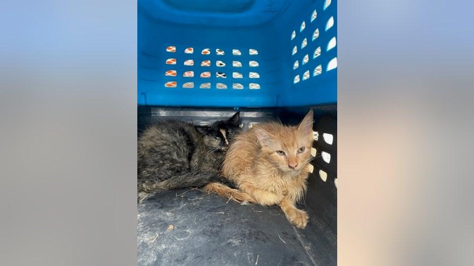 kittens found alive prescott