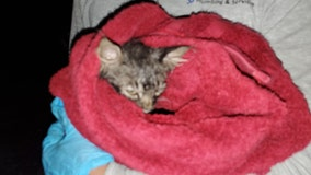 'They never gave up on him': Joint effort helps rescue 10-week-old Arizona kitten from pipe