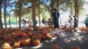 Pumpkins making strong comeback this season in Arizona after helpful monsoon storms