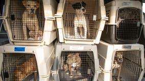 Arizona Humane Society takes in pets displaced by Hurricane Ida