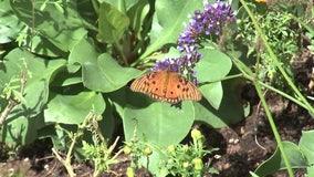 Fall butterfly exhibit opens at Desert Botanical Garden