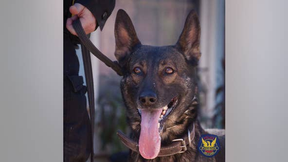 After 10 years of service, retired Phoenix Police K-9 Gilly passes away