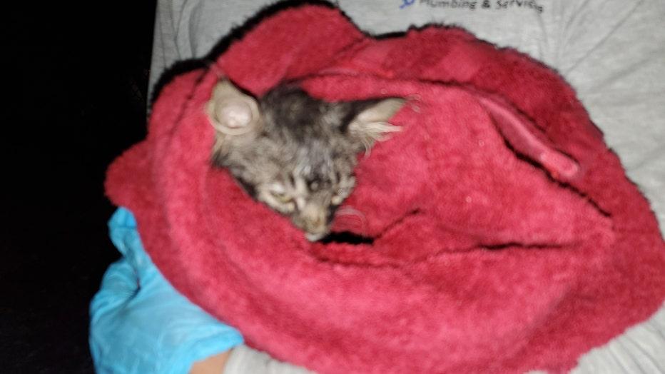 Rescue of kittens in Safford, Arizona.  Photos of Cheryl Christensen