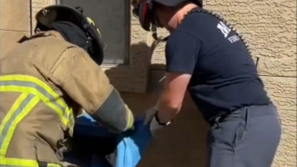 Cat stuck in cinder block wall rescued by firefighters in Arizona