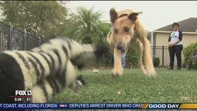 Hometown Heroes: Greyhound rescue