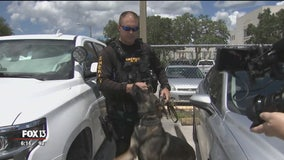 Pasco deputy returns to work after being shot in the line of duty