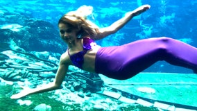 Kids -- or kids at heart -- can write letters to zoo animals, Weeki Wachee mermaids