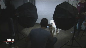 Hometown Heroes: Photographer helps Tampa's adoptable dogs