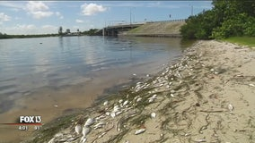 Scientists: Red tide is back in Florida's southwest coast