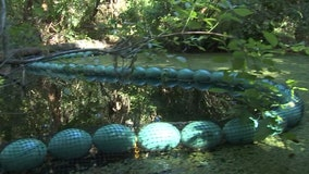 Water goat installed along Hillsborough River in Temple Terrace