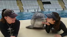 Adorable video of dolphin at SeaWorld Orlando kissing two trainers goes viral