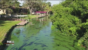 Florida's toxic algae crisis: Conditions ripe for years of blue-green algae blooms