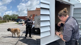 Dogs rescued from hot car in Hernando County
