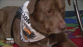 Hometown Hero: 'Odd Job' the therapy dog