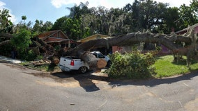 Massive tree damages Seminole Heights homes