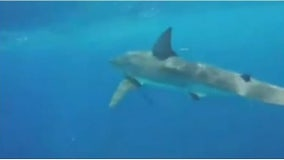 90% of sharks mysteriously wiped out nearly 20 million years ago, researchers say