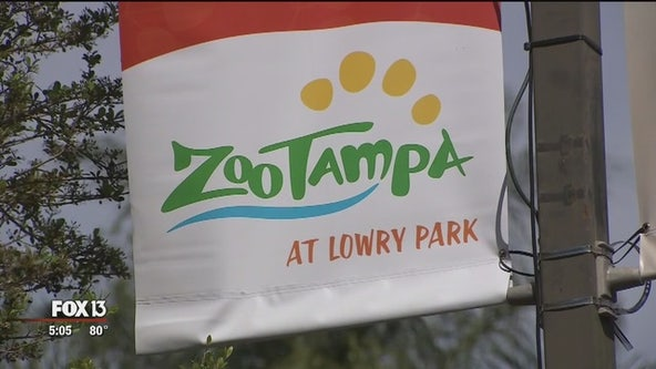 ZooTampa offering free 'Senior Day' Tuesday before reopening to public