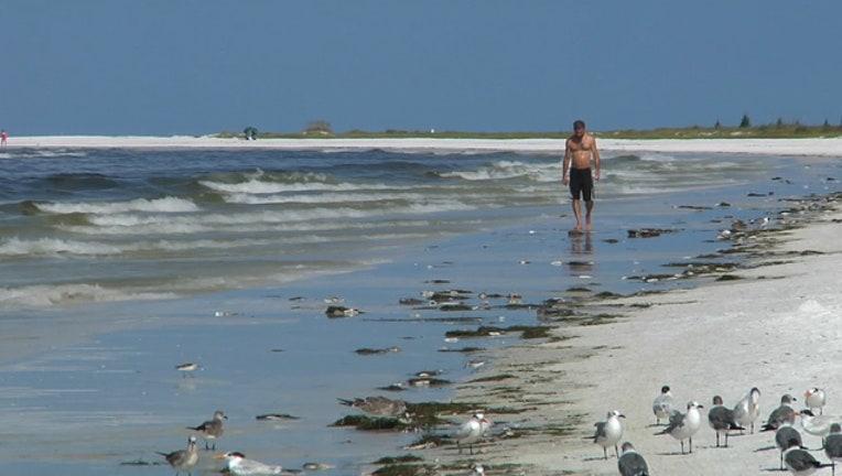 d2921dc3-WTVT_Siesta Beach Bacteria_082318