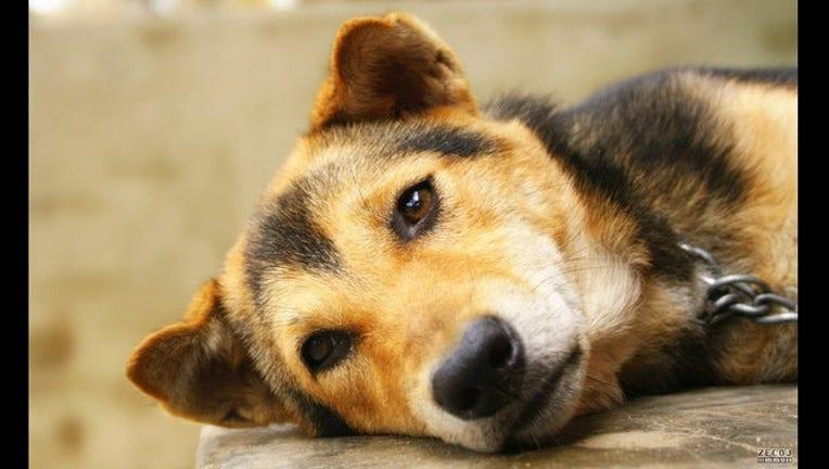 sad-dog-404023-404023.jpg
