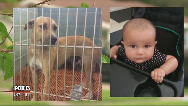 f16ae556-Child_killed_by_dog_1_20181008222248