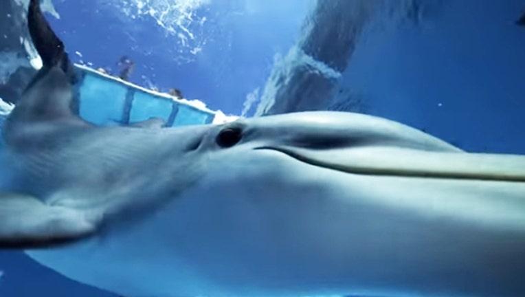 5cb9dbb8-Dolphin_1454327236703.jpg