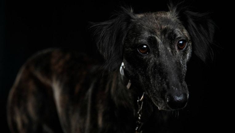f75a8ace-GETTY-sad-dog_1515685412911-404023.jpg