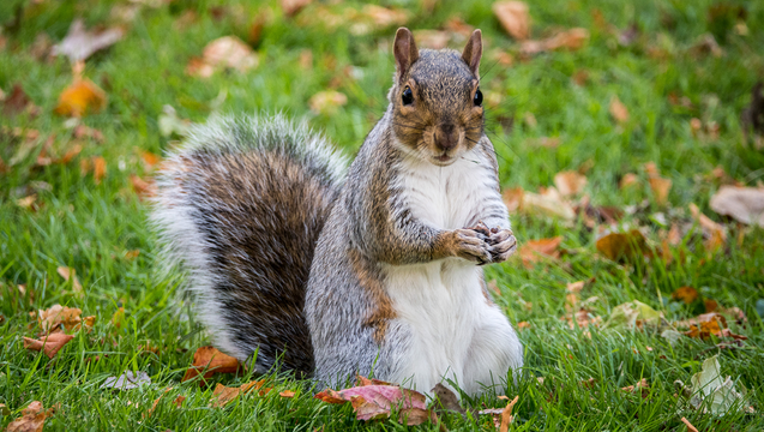 eed3587e-GETTY_squirrel_101018_1539174060279-402429.png