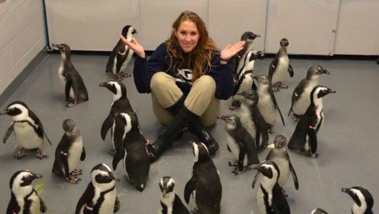 80bf742b-Georgia Aquarium Penguin Chicks_1452615178524-404959.jpg
