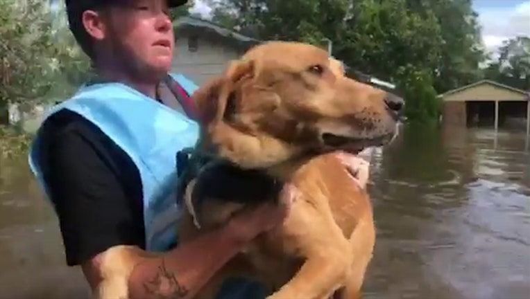 0bbc3811-PETA_saves_dog_trapped_by_floodwaters_0_20180920095159