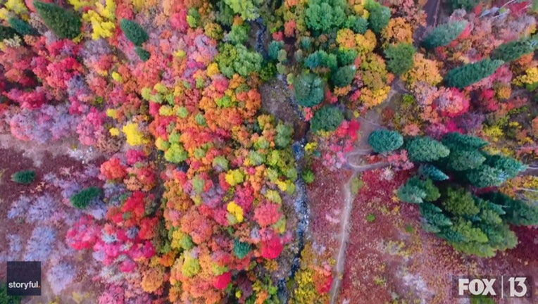 83150073-Storyful-209995-Unbeleafable_Drone_Footage_Shows_Fall_Colors_in_Northern_Utah.00_00_31_29.Still002_1538594739349.jpg