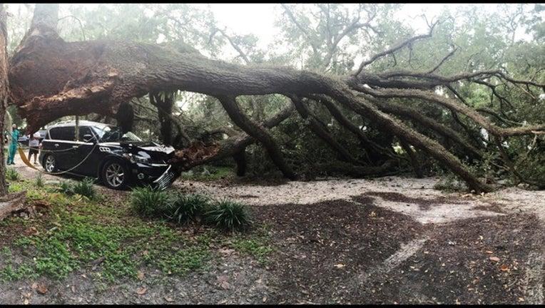626da6b9-Tree down 109th Ave_1440869245564.jpeg