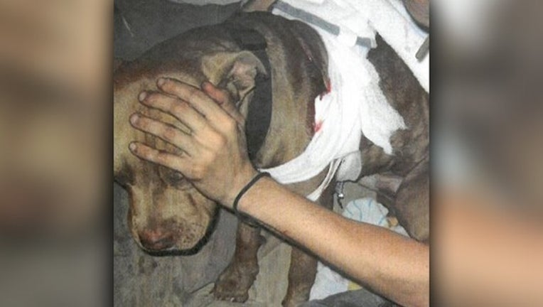 c317a969-Injured dog.jpg