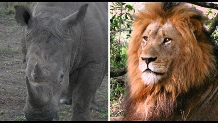0aaf8bb5-animals_Africa_1530824617553-405538.JPG