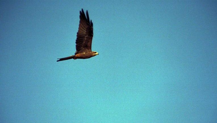 fd66d951-australian birds_1515779884803.jpg.jpg