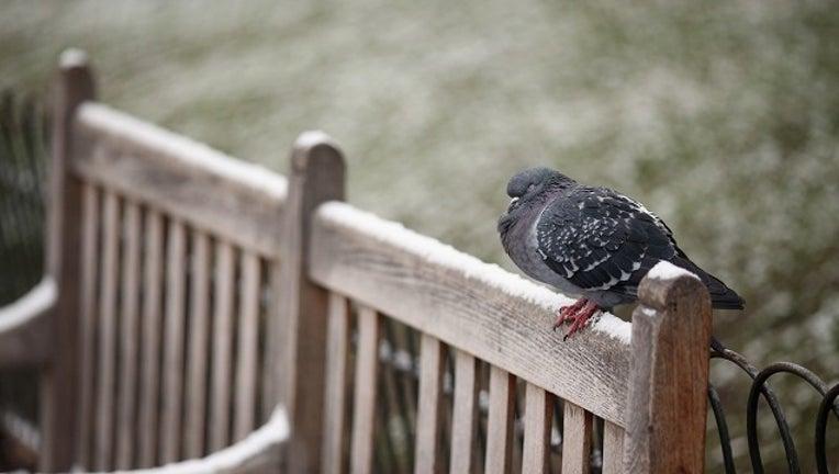 d37a3d87-Getty bird on park bench-401096