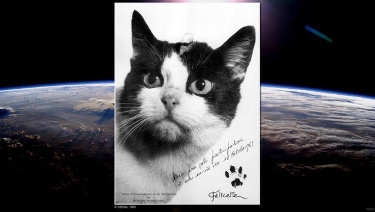 f86768fe-cat in space cerma_1476794935107.jpg
