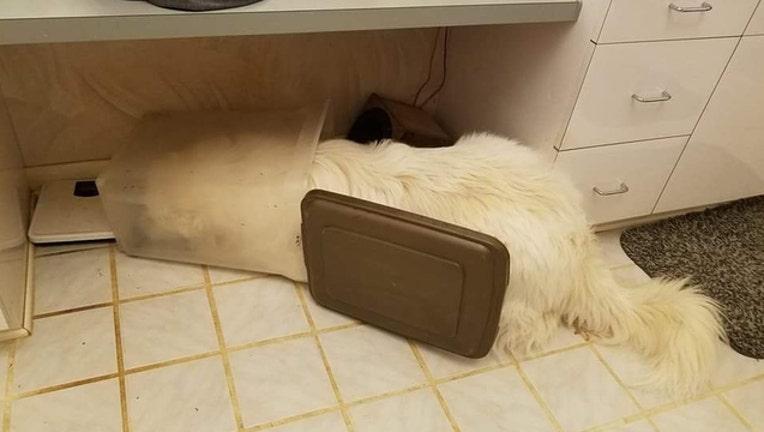 8e7d7c1d-dog asleep in bin_1512398306197.jpg