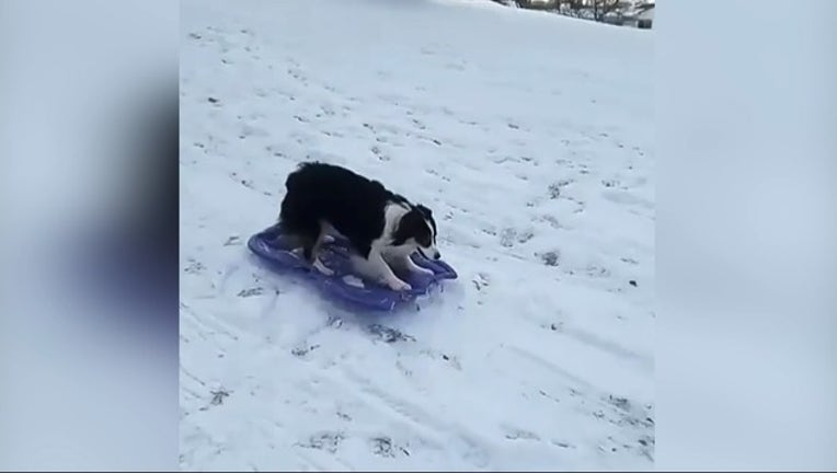 b0221a62-dog sleds_1515104770942.PNG-407068.jpg