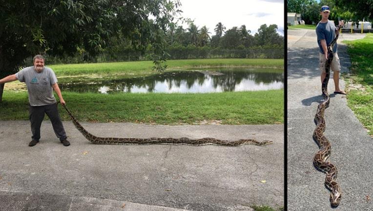b27cf790-fwc two pythons caught_1567004623852.jpg.jpg