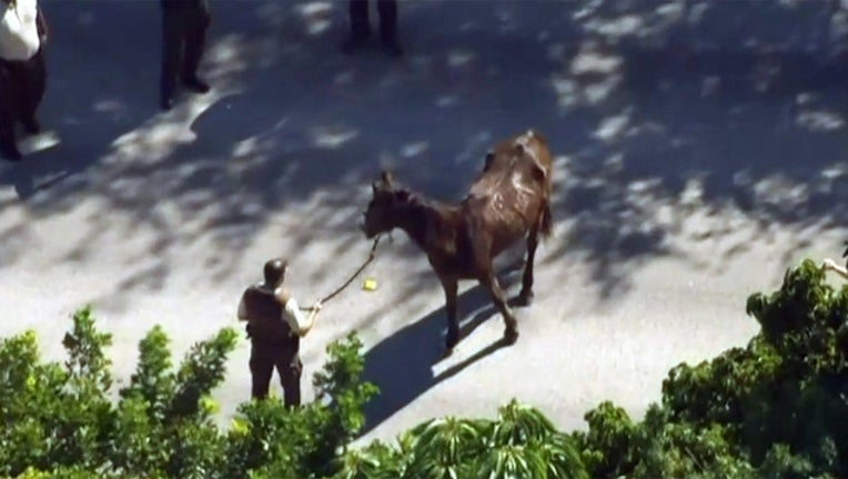 b82617c0-horse-cruelty_1479949935082-402429.jpg